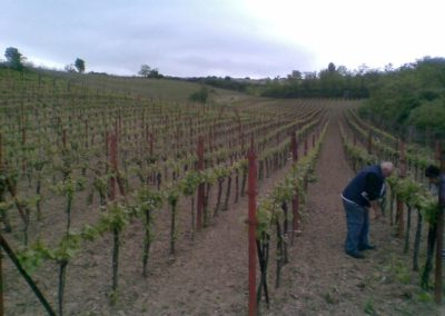 vinohrad zaječí